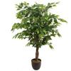 Ficus ikea